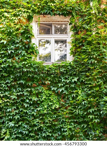 white window in old house with green leaves on wall, retro architecture style - stock photo