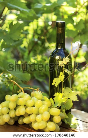 White wine bottle and bunch of grapes against green spring background  - stock photo