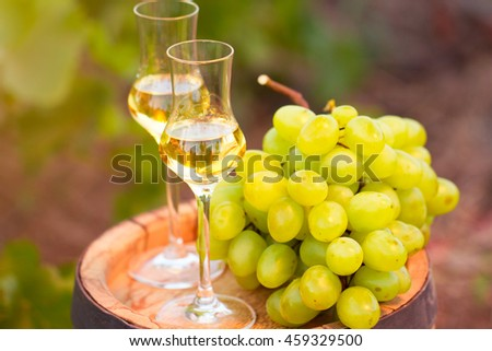 White wine glass, young vine and bunch of grapes against green  background of the vineyard