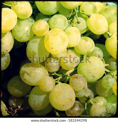White wine grapes in a market, close up - stock photo