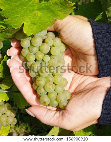 White Wine in female Hands - stock photo