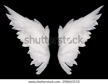 white wing isolated  on dark background  - stock photo