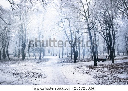 White winter in the park - stock photo