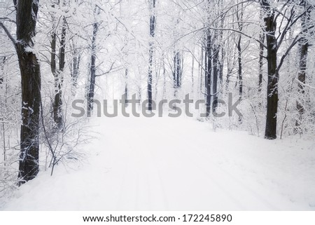 white winter landscape in Canada with trees covered in snow and road leading away - stock photo