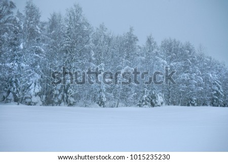 White winter landscape in the forest. View after snowfall.