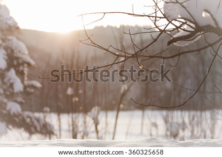 White winter wonderland with snow and sun at christmas time. The sun kisses this wonderful cold nature forest winter scene with ice, snow, snow-covered trees and icy branches. - stock photo