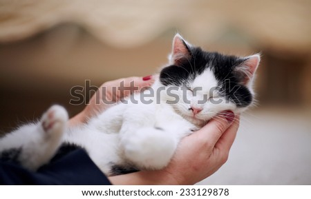 White with black a kitten on hands. The animal protection. Kitten in caring hands. - stock photo