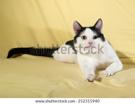 White with black spots kitten lying on yellow background