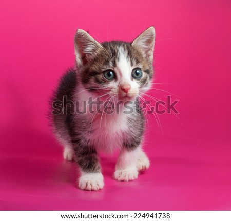White with striped kitten standing on pink