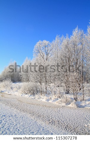 white wood on river coast - stock photo