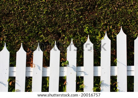 white wooden fence and conifers