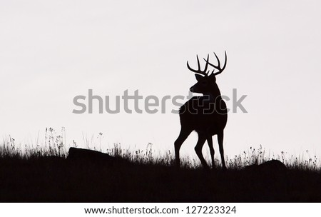 Whitetail Buck Deer Stag, black & white silhouette, Midwestern Deer Hunting the Midwest - stock photo