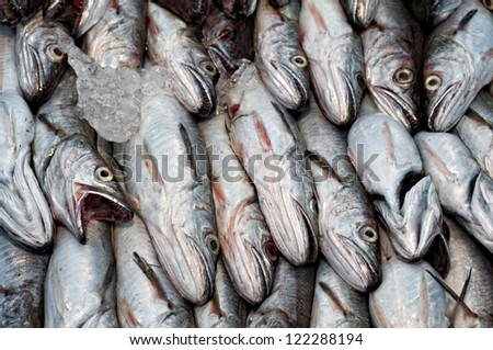 Whiting recently caught downloading on port - stock photo