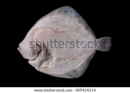 Whole fresh raw disemboweled flatfish bottom side, caught in the Alboran Sea in Spain, isolated on black background. - stock photo