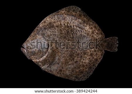 Whole fresh raw flatfish caught in the Alboran Sea in Spain, isolated on black background.