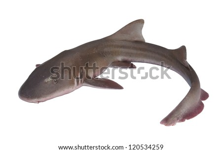 stock-photo-whole-fresh-shark-isolated-o