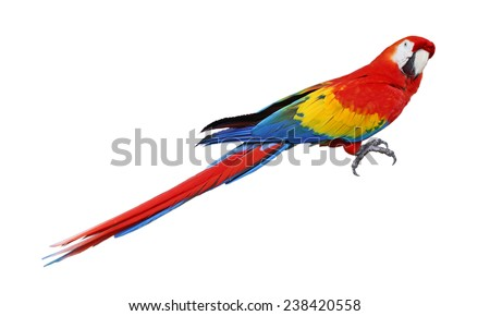 Whole parrot bird isolated on white background - stock photo