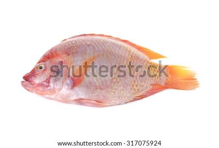 whole round fresh red Tilapia fish or TUM-TIM fish on white background - stock photo