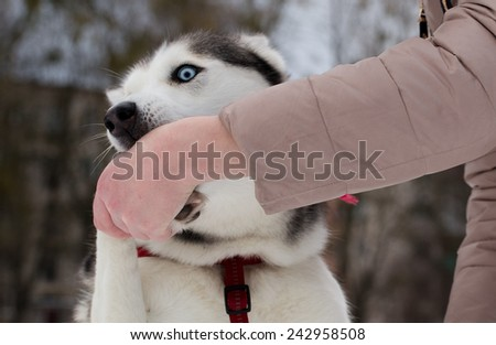 how to stop husky from biting