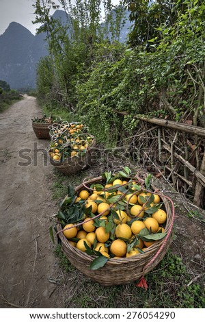 Wicker basket filled with freshly harvested harvest fresh ripe oranges citrus fruits, standing on roadside near orchard, in front of  karst hills of Guilin, Yangshuo, Guangxi, China - stock photo