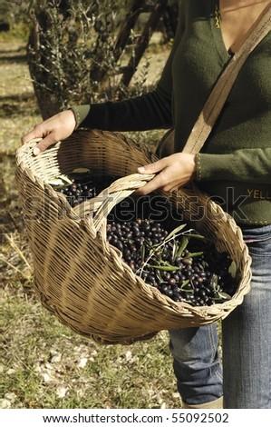 wicker basket full of olives - stock photo