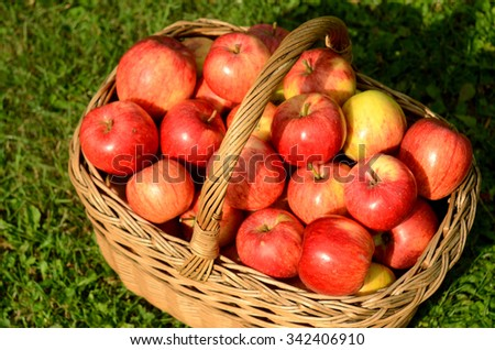 Wicker basket full of red apples on summer grass - stock photo