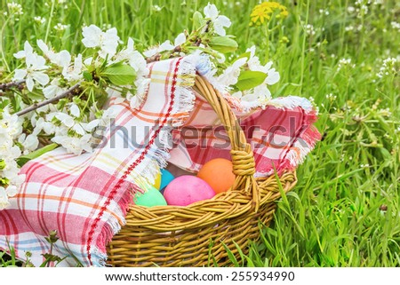 Wicker basket with Easter colored eggs under the blossoming cherry branch on a spring green grass - stock photo