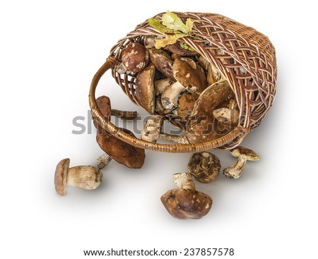 Wicker basket with edible mushrooms on a white background