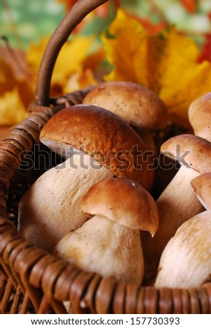 wicker basket with fresh cep (porcini) mushrooms in autumn forest