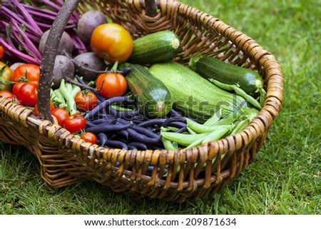 Wicker basket with freshly picked vegetables - stock photo