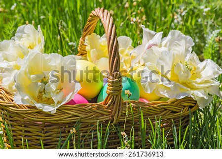 Wicker basket with painted easter eggs and white double tulips close up in the green grass on a sunny spring day
