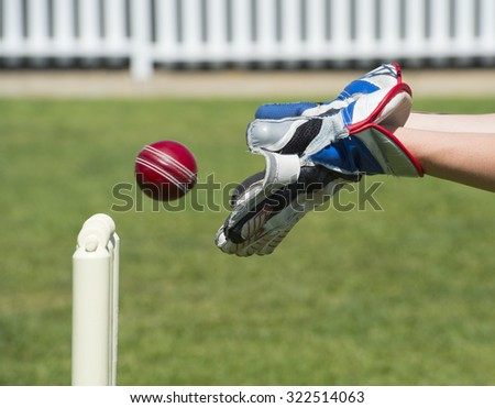 Wicket Keeper Catches Cricket Ball Stock Photo 322514063 Shutterstock