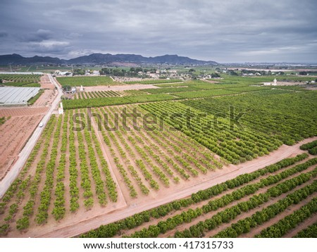 Wide angle aerial view of orange fields with stormy clouds in Valencia