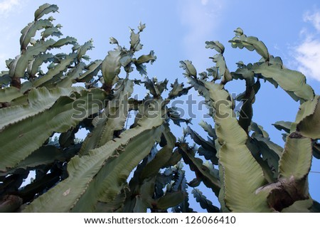 Wide angle shot under cactus and a beautiful blue sky - stock photo