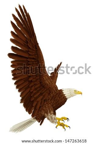 wide eagle - stock photo