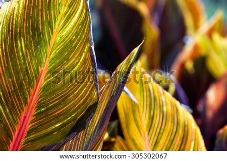 wide leaf full of color and pattern on an ornamental plant