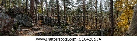Wide panorama of pine forest, autumn, Russia