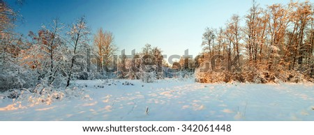 Wide panorama of the winter forest. Hoarfrost and Rime on trees. Sunset in the winter forest. Frost and snow on the branches. Beautiful winter nature. The winter landscape.  New year's fairy tale. - stock photo