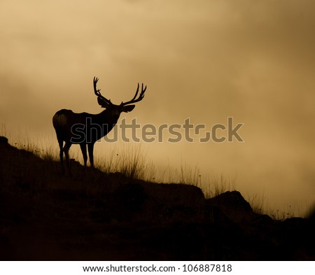 Wide-racked Mule Deer Buck Silhouetted against evening sky - stock photo