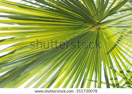 wide relief palm leaf texture