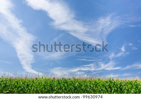 Wide shot of a farmer's field against a blue sky on a sunny day. - stock photo