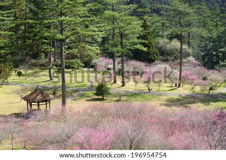 Wide shot of a large open area in a park with a gazebo and blooming trees. - stock photo