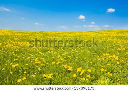 Wide shot of spring meadow with dandelions and sky, copy space