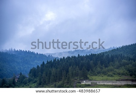 wide view of spruce Carpathian forest