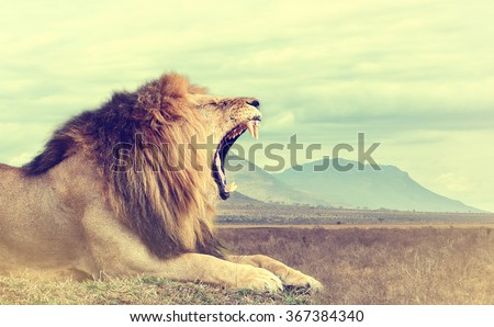 Wild african lion. Vintage effect. National park of Kenya, Africa - stock photo