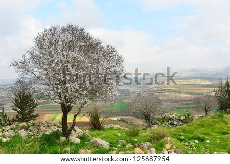 Wild almond tree in beautiful scenery. Flowering tree in a historic place. - stock photo