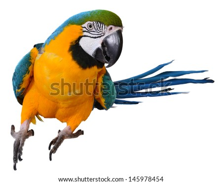 Wild and Beautiful Macaw