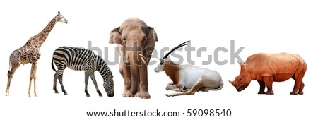 wild animal collection giraffe  zebra  elephant rhino antelope - stock photo
