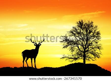 wild animal in the mountains - stock photo