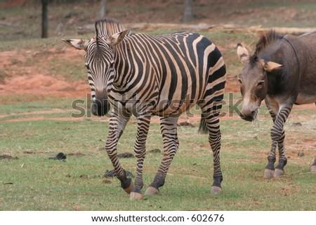Wild Animal Safari Park, Pine Mountain, Georgia - stock photo